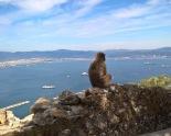 2016 Gibraltar apes